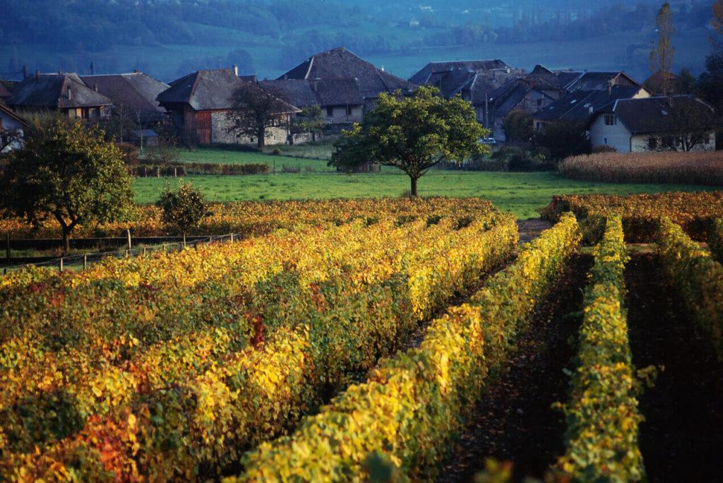 la route des vins de Haute-Savoie